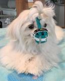 BUMAS TÜRKIS Puppy
